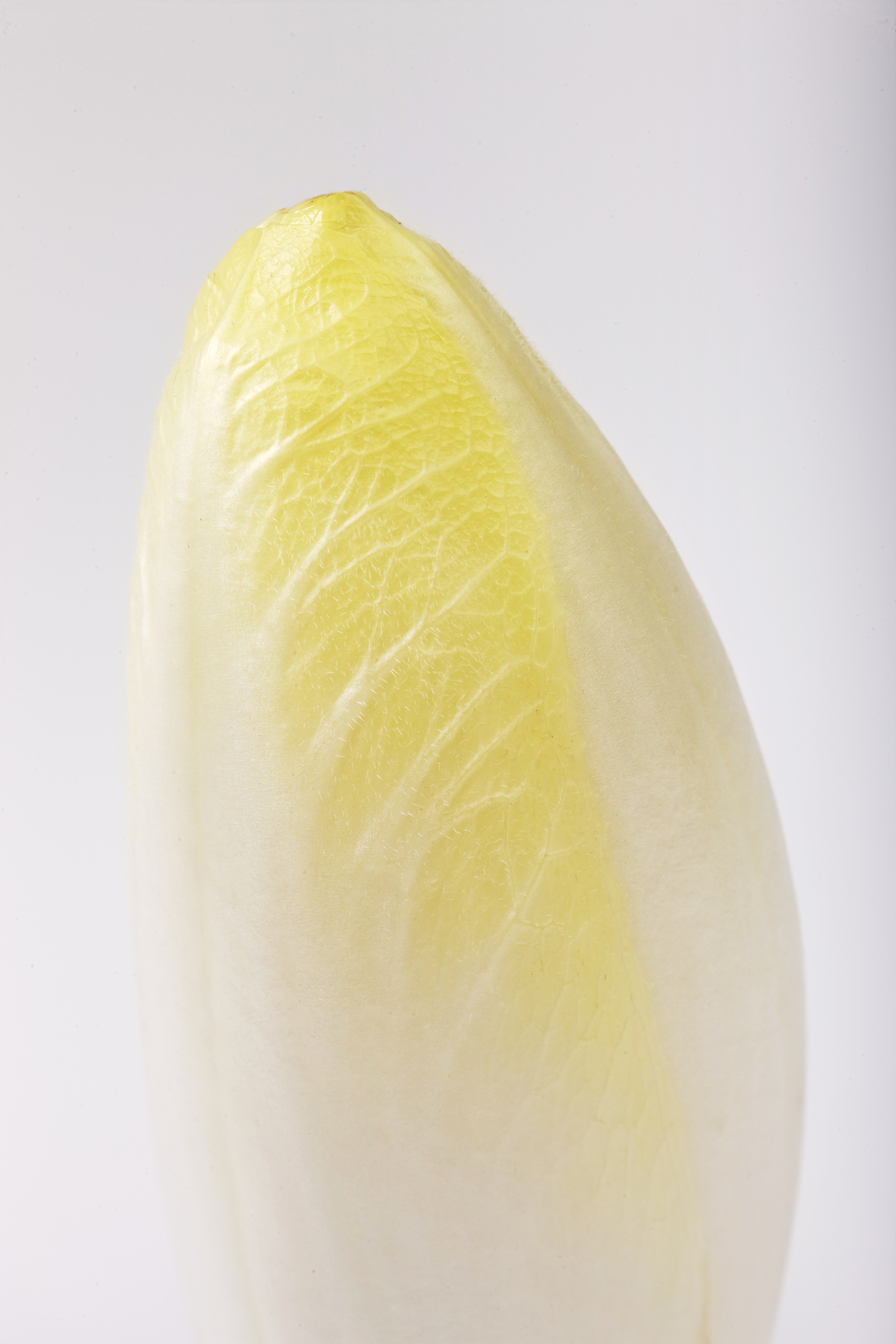 What is Endive